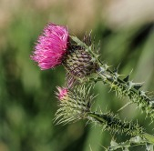 Weeds sometimes look appealing, but they're dangerous.